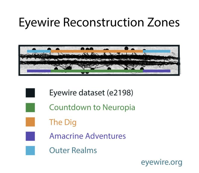 Eyewire reconstruction zones, eyewire, infographic