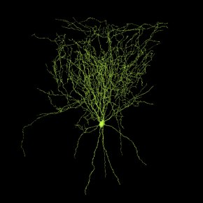 iarpa microns, MICrONS, machine intelligence cortical networks, AI, artificial intelligence, connectome, connectomics