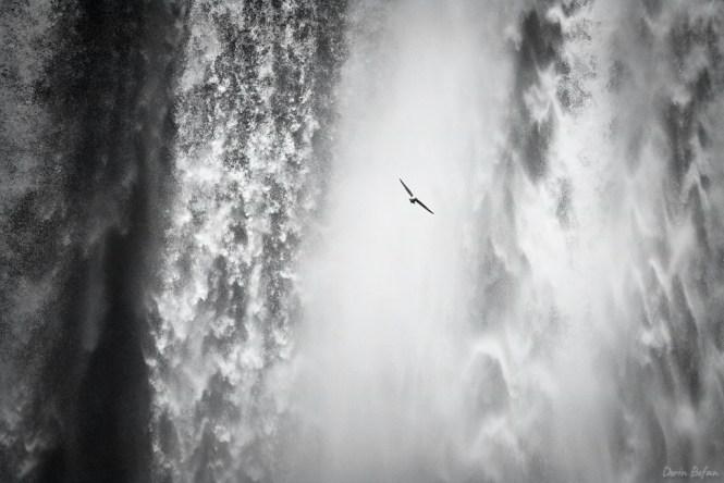 fotografie alb-negru