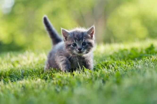 sfaturi foto pisici