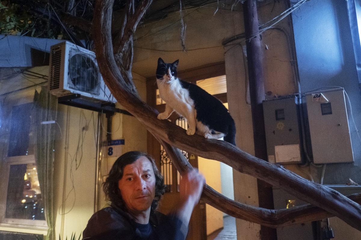 foto cu pisici