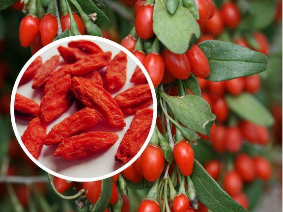 Goji berry 1