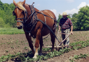 Man and Horse - Plowing