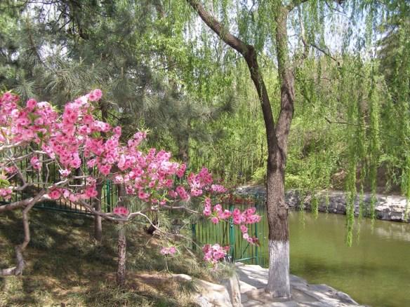 Frühling im Somemrpalast in Peking