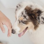 Dog Sniffing Hand
