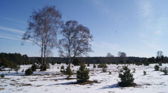 Kurztrip in die Lüneburger Heide