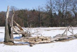Totes Holz, Heide