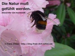 Die Natur muß gefühlt werden.  Alexander von Humboldt