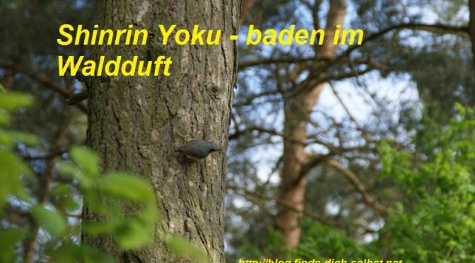 Shinrin Yoku – Gesundheit im Wald erfahren