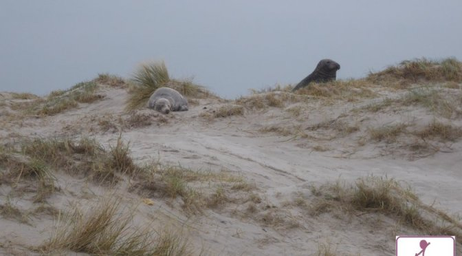 Robbenliebe life erleben