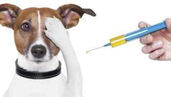Saiba mais sobre as vacinas para cães e gatos e as obrigatórias.
