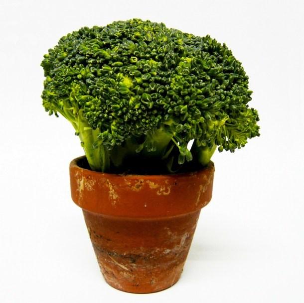 broccoli-315593_1280