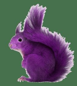 Purple-Squirrel.png