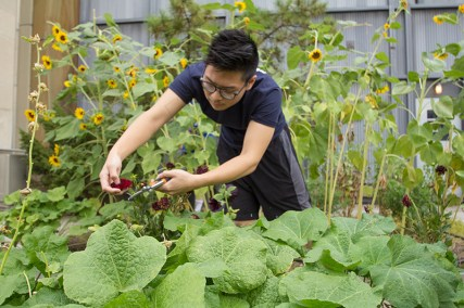 Our Rooftop Natural Dye Garden promotes sustainable and eco-friendly dyeing practices.