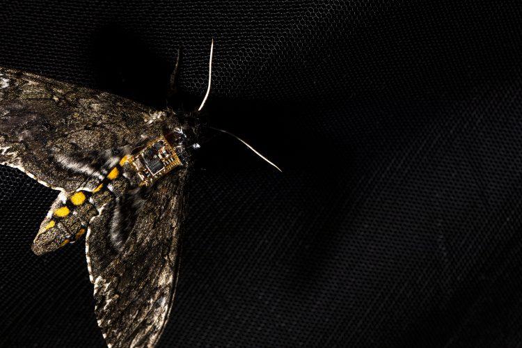 Autonomous drone insect