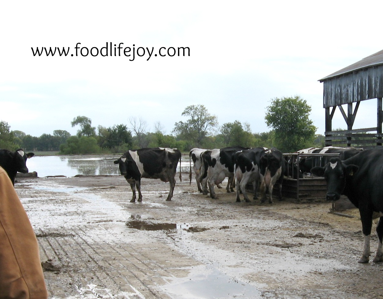 Cow Comfort and Raw Milk