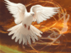 Dove With Fire