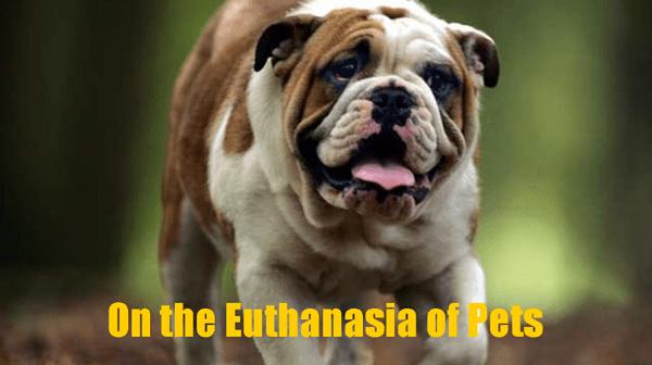 The Euthanasia of Pets