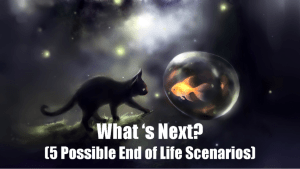Whats Next at End of Life?