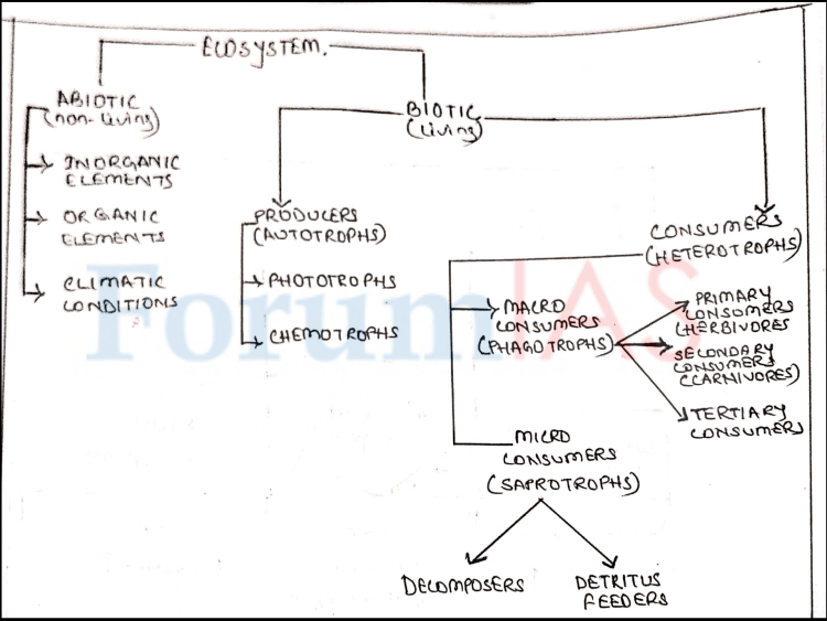 Structure of an Ecosystem