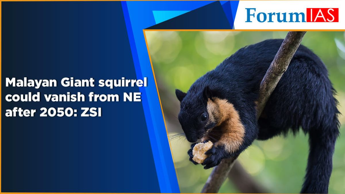 Malayan Giant squirrel could vanish from NE after 2050 ZSI