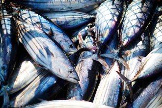 Un classique culinaire : le thon