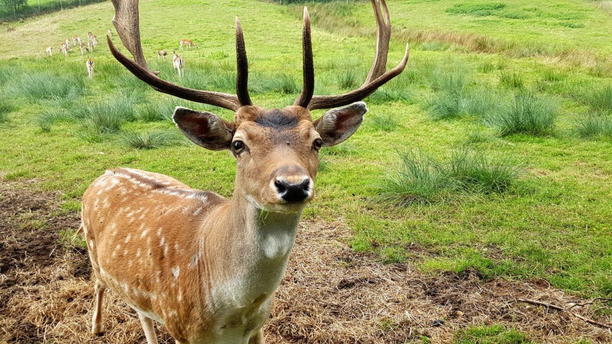 Natur hautnah: Die schönsten Tier- und Wildgehege im Fränkischen Seenland