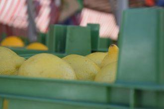 Zitronen am Markt in Gunzenhausen