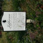 Jefferson's Monticello Winery