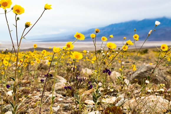 Post image for Photo Diary: The Super Bloom in Death Valley