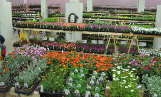 The Plant Sale offers nearly 2300 varieties of plants.