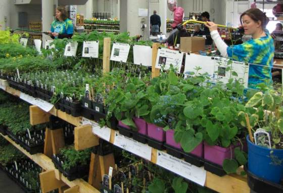 There are many volunteer jobs at the Plant Sale, including watering and tidying the plants.