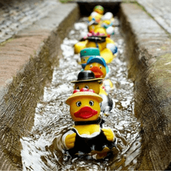 Have a rubber duck race to raise money for your political campaign
