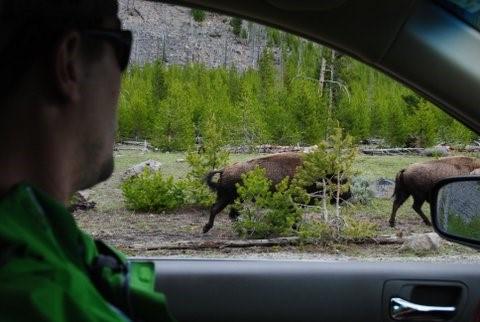 Travel PT Yellowstone Road Trip