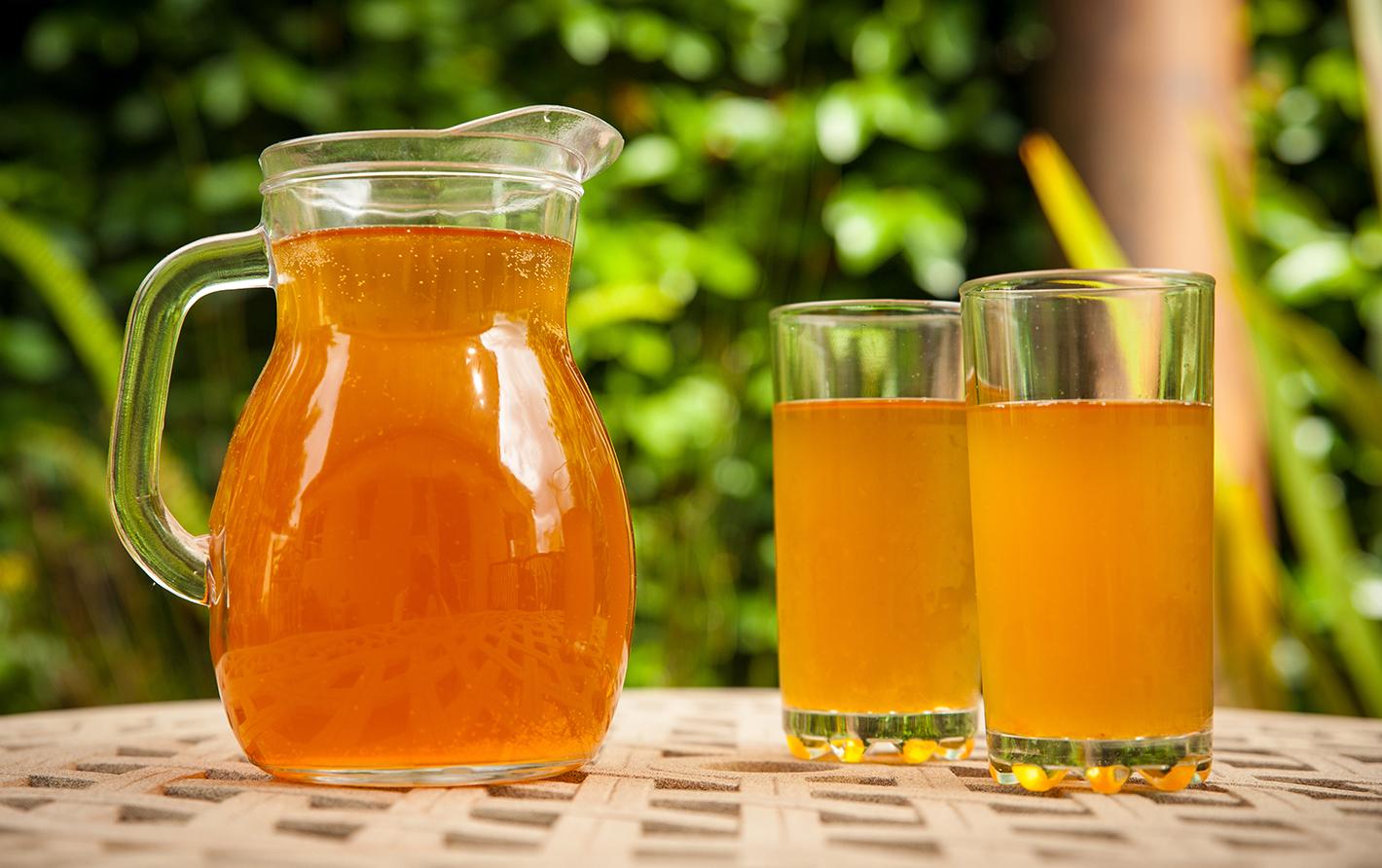 kombucha probiotic tea