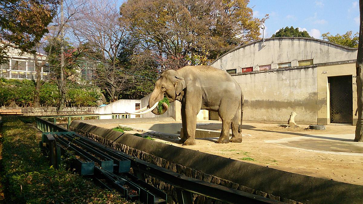 ご飯を食べてる象のマック