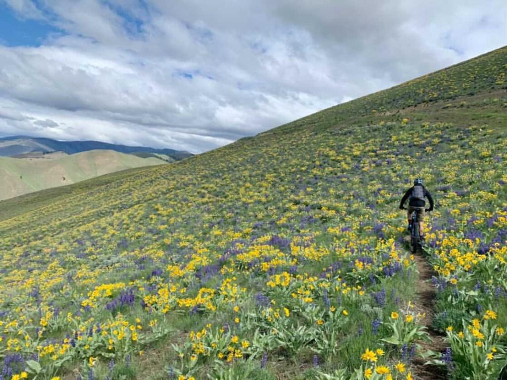 Alan mountain bikes through a field of wild flowers.