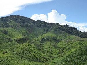 BKK to Bali 5