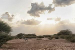 Djibouti desert