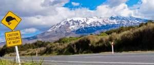 New Zealand Kiwi Crossing
