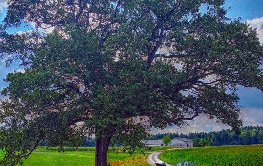 Bäume am Weg