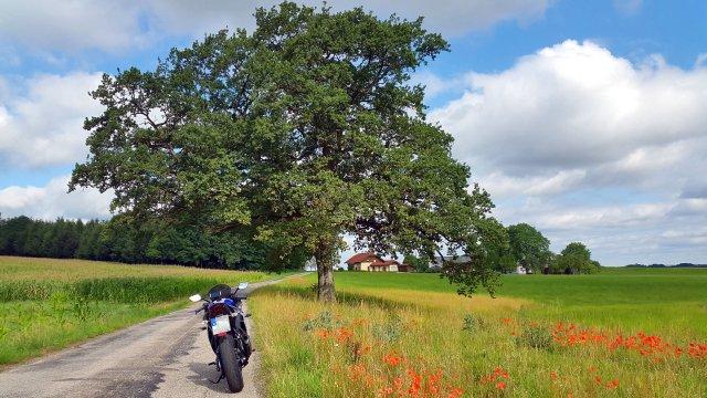 Baum mit Yamaha YZF-R3