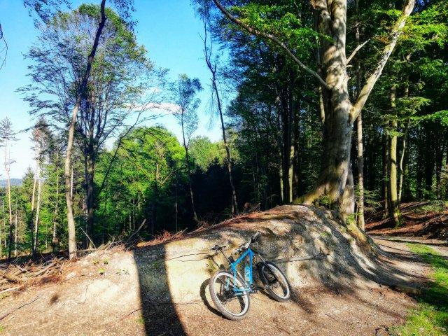 Waldabfahrt nach Bertenöd mit MTB