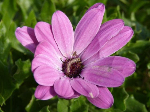 Flores proteger plaga