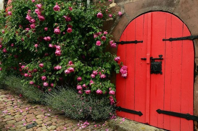 rosal-rosas