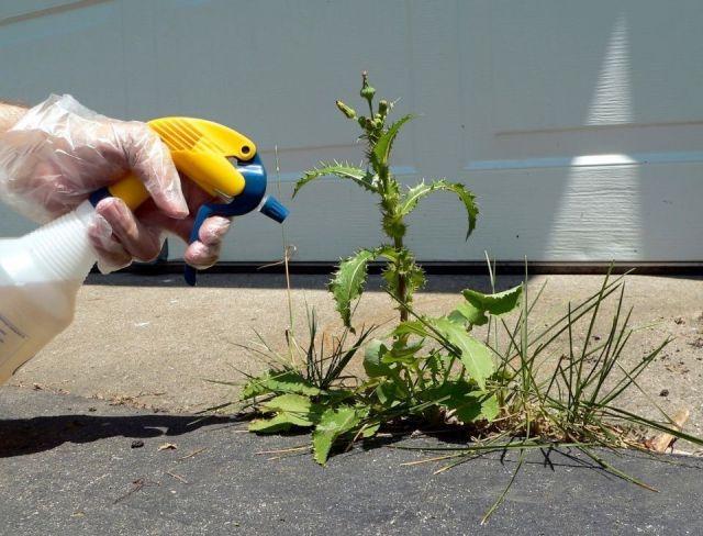 herbicidas-naturales-mala-hierba