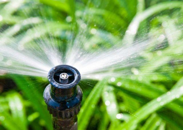 plantas-exceso-agua