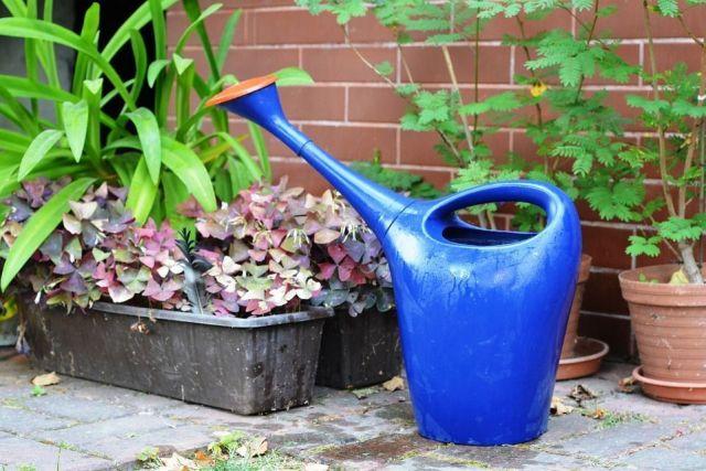 cuidar tus plantas en invierno