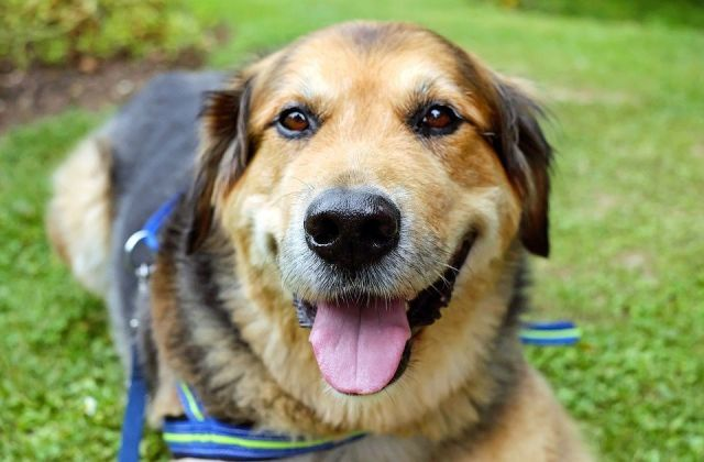 beneficios-arneses-perros