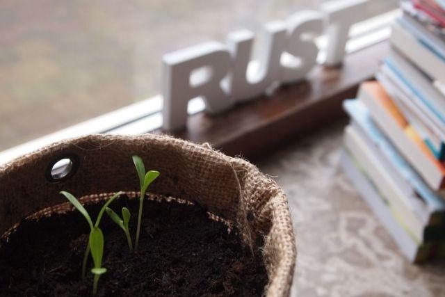 errores-sembrar-semillas
